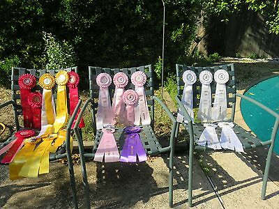 Horse Show Long Ribbons Lot of 20 Almaden Farms and Let's Show Horse Shows