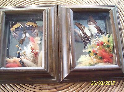 Vintage Framed Real Butterflies - Flower & Butterfly Taxidermy - Lot Of 2