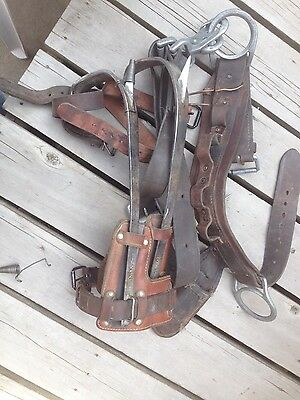 Lineman's pole climbing belt and spurs