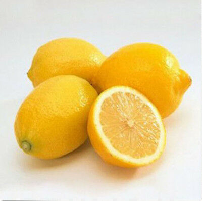 50Pcs Rare Lemon Tree Indoor Outdoor Available Heirloom Fruit Seeds Love Garden