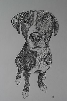 original pencil drawing dog A3, signed
