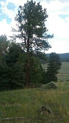 Colorado Mountain Land.  Privacy & Wildlife.  Prime Location!