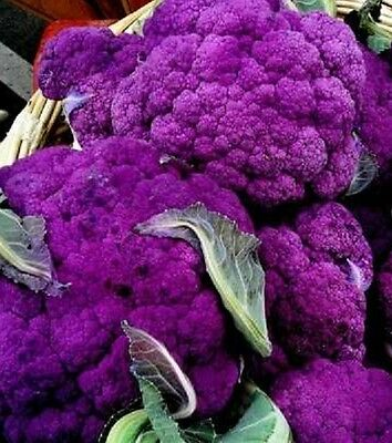 50 Purple Cauliflower Seeds DI SICILIA VIOLETTA Italian Heirloom Vegetable