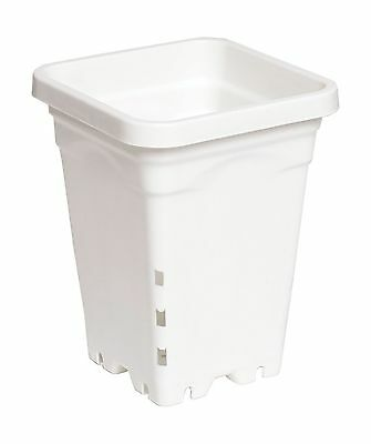 Active Aqua 5-Inch x5-Inch Square White Pot 7-Inch Tall 100 Per Case New