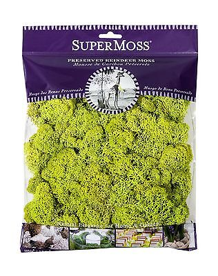 Dba:supermoss Products Super Moss 21707 Reindeer Preserved Chartreuse 4-O... New
