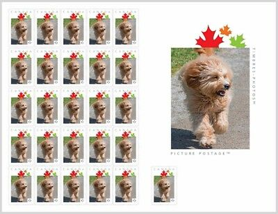 LABRADOODLE RUN Cross Breed _PRE-ORDER_  Stamp SHEET Canada 2017 po44b