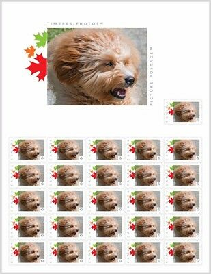 LABRADOODLE FACE CrossBreed _PRE-ORDER_  Stamp SHEET Canada 2017 po43b