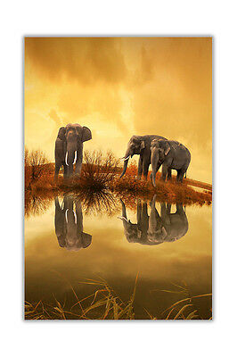 Elephant in Sunset Poster Wall Print Art Decoration Home Office Room Pictures