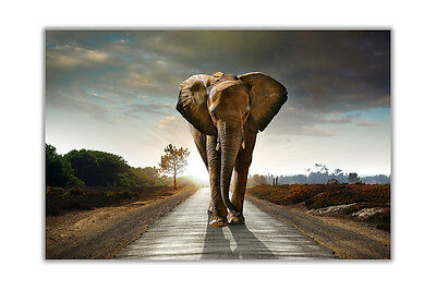 New Elephant Walking on Road Poster Art Wall Prints Home Decoration Pictures