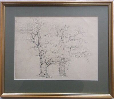 FRAMED GRAPHITE DRAWING circa 1900 A BEAUTIFUL STUDY OF OLD TREES