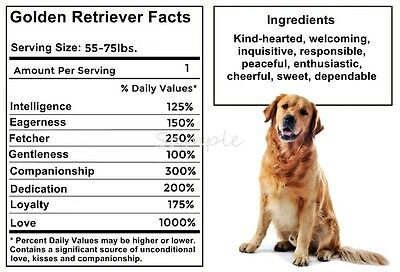 GOLDEN RETRIEVER Facts LARGE FRIDGE MAGNET