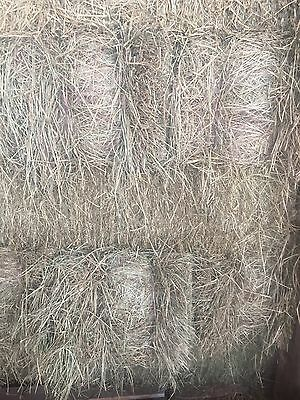 Meadow Hay - Horse, Cattle, Sheep, Goat, Alpaca Feed - Small Bales