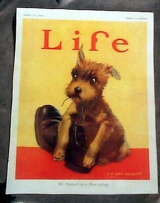 """Puppy """"he Started On A Shoe-String """" Reprint Life Magazine Cover 1925 (Breed?)"""