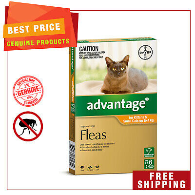 ADVANTAGE ORANGE Pack for Cats Up to 4 Kg 6 Pipettes by Bayer