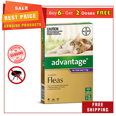 ADVANTAGE PURPLE Pack for Cats Over 4 Kg 6 Pipettes + EXTRA 2 Pipettes