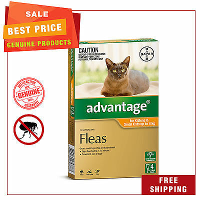 Advantage for Cats 4 Pipettes Up to 4 Kg Orange Pack Cat flea treatment