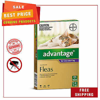 Advantage for Cats 4 Pipettes Over 4 Kg Purple Pack Cat flea treatment