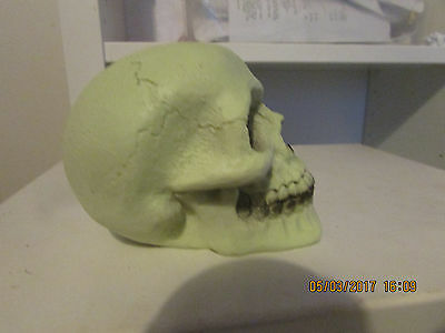 "Latex Mould Mold Of A Small Skull  4"" X 2.5"" X 3"" Tall"