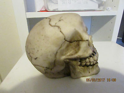LATEX MOULD MOLD OF A SKULL 12x8x8cms high