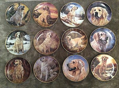 Limited Edition Golden Retriever 12 Piece Collector Display Plates