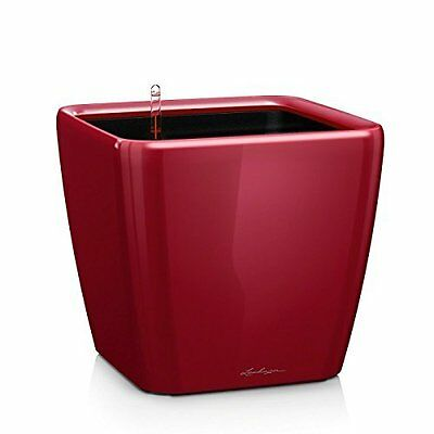 Lechuza Premium Quadro 21cm High Gloss Scarlet Red Self Watering  Rounded Square