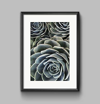 CACTUS CLOSE UP Print PHOTO POSTER A4 or A3 Wall Art HOME DECOR