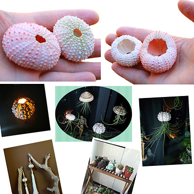 4 Pcs DIY Sea Urchin Sea Shells For ousewarming Home Decor Accents Best 2017