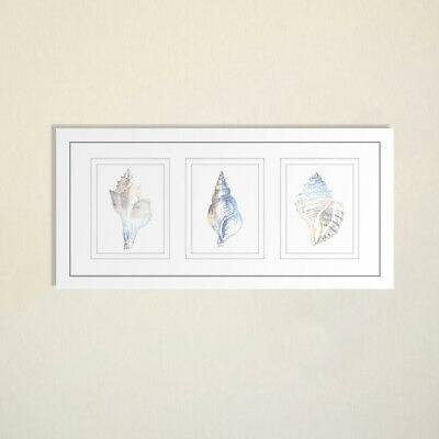 NEW Natural Shells Series Watercolour Silhouette Framed Trio Print