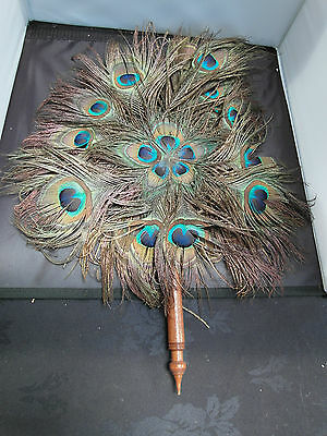 Vitorian Feather Peacock Fan