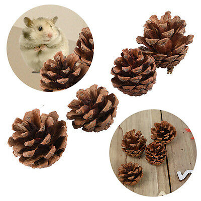 4x Pet Wood Pine Cone Teeth Grinding Chew Toys For Rabbit Hamster Guinea Pig Rat