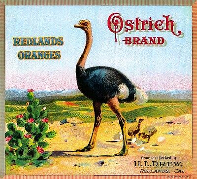 Redlands California Ostrich Brand Bird Orange Citrus Fruit Crate Label Art Print