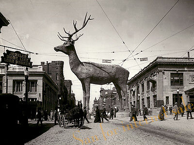 Vintage 1916 Photo ((Rudolph Red-Nosed Reindeer)) 62 feet tall Christmas Gift
