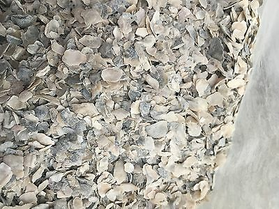 Crushed Oyster Shell - Prolonged Calcium source - Soil amendment (1 Gallon)