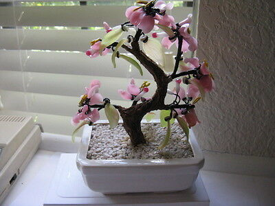 Bonsai Cherry Blossom  Tree