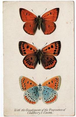 Early THE LARGE COPPER BUTTERFLY Cadbury's Cocoa Reward Card