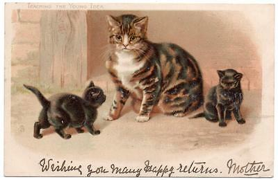 1903  Tucks   Teaching the Young Idea   Helena Maguire Litho  Cat Postcard