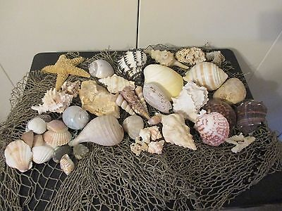 Lot of Assorted Sea Shells Coral Nautical Marine Decor Crafts Science LOT A