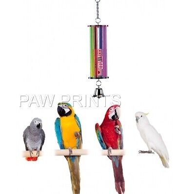 Large Acrylic Parrot Toy 4 Lgr Moving Dice In Tub + Bell Grey Macaw 31366