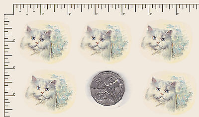 "5 x Ceramic decals. Decoupage White Cat Face Animal Pet  1 1/2"" x 1 1/4""  PD911"