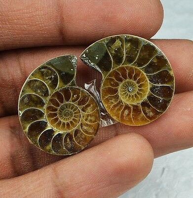 35cts Natural Ammonite Fossil Pair from Indonesian Sea NJ48