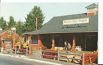 Vintage chrome postcard, Aspetuck Valley Orchards, Easton, CT