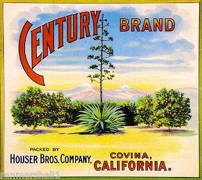 Covina Los Angeles County Century Tree Orange Citrus Fruit Crate Label Art Print
