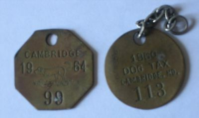Two (2) vintage Cambridge Md Maryland dog tags 1960 and 1964