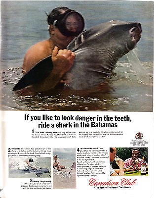 1965 Canadian Club-Riding Sharks in the Bahamas- 10.5x13.5 Original Magazine Ad