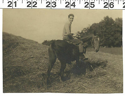 Vintage Old B&w Photo Handsome Man On Beautiful Horse In Field #3084