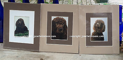 3 IRISH WATER SPANIEL DOG ART PRINTS of Watercolor Paintings double matted 8x10""