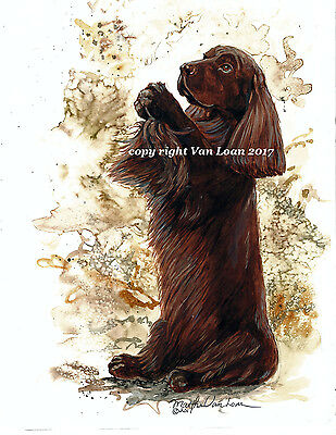 Sussex Spaniel sitting up  limited edition print 11 x 14