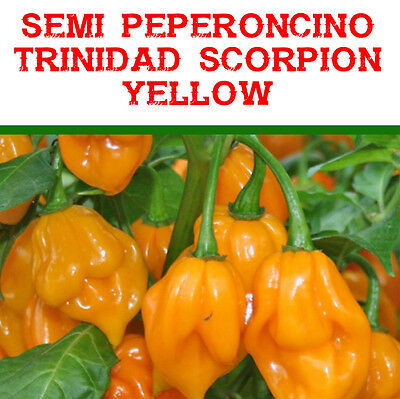20 semi di peperoncino pepers Trinidad Scorpion Yellow