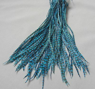 Lot of 100 Metz Rooster Grizzly Saddle Feathers - Dyed Teal - Fly Tying