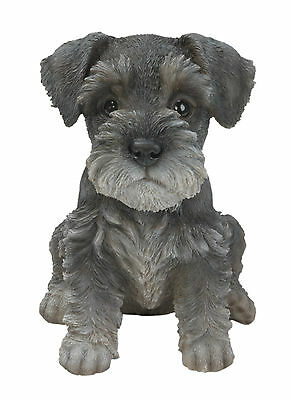 Vivid Arts - PET PALS PUPPY DOG & KENNEL BOX - Miniature Schnauzer